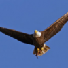 Image of Your career can soar like an eagle - Certified Travel Teacher